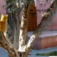 "Gato en árbol • <a style=""font-size:0.8em;"" href=""http://www.flickr.com/photos/92957341@N07/8457674859/"" target=""_blank"">View on Flickr</a>"