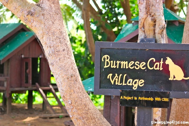 Burmese Cat Village