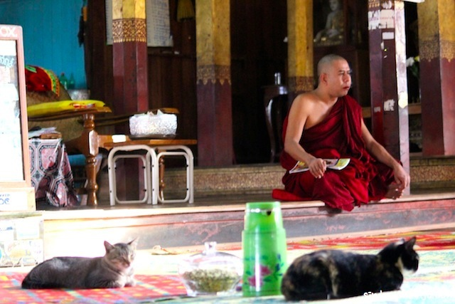 Jumping cat Monastery